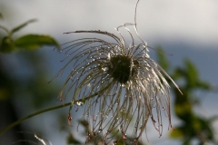 IMG_0093_A1